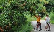TAT---Fruits_Orchard_Tour_03-500x300