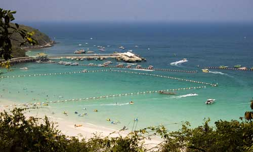 Jellyfish warning for travellers swimming in Thailand