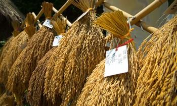 Thai Rice Thainess-03