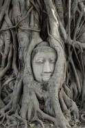 The elegantly caved Buddha head at Wat Maha That