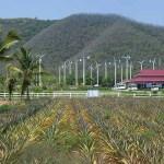 Chang Hua Man Royal Initiative Project