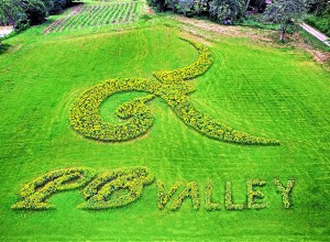 PB Flower Park returns on 1 November at PB Valley Khao Yai Winery