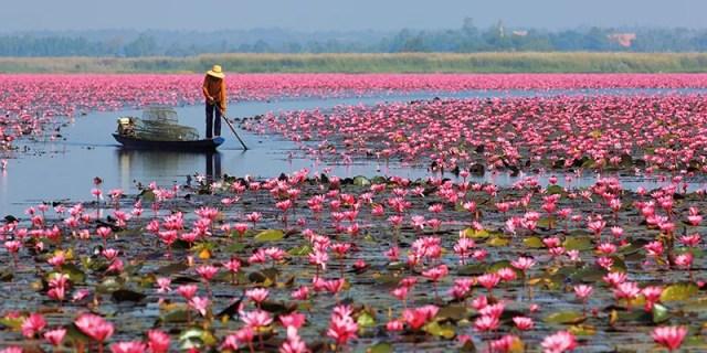 Red Lotus Sea Nong Han Kum Pavapi