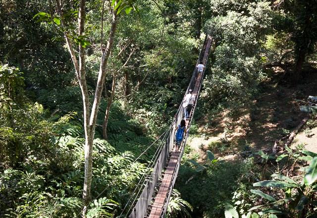 Tree Top Walk at Doi Tung
