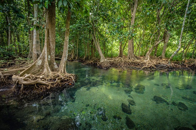 Krabi awarded Global Low-Carbon Ecological Scenic Spot at Global Forum on Human Settlements 2018