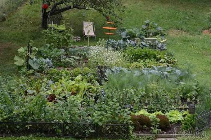 Mein Garten 2018