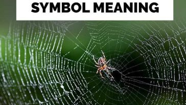 Spiritual Meaning Of A Spider Crawling On You