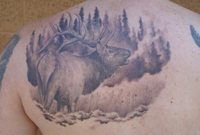 Wildlife Tattoos Designs Ideas And Meaning Tattoos For You