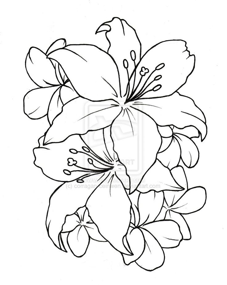 Water Lily Flower Tattoo Designs