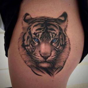 Tigre ojos azules