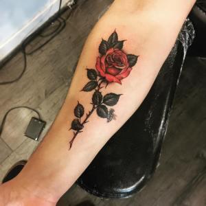 Flor Rosa por Devin Mena