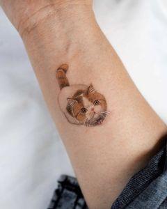 Gatito marrón