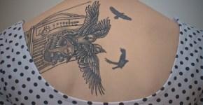 Aves escapando del radio