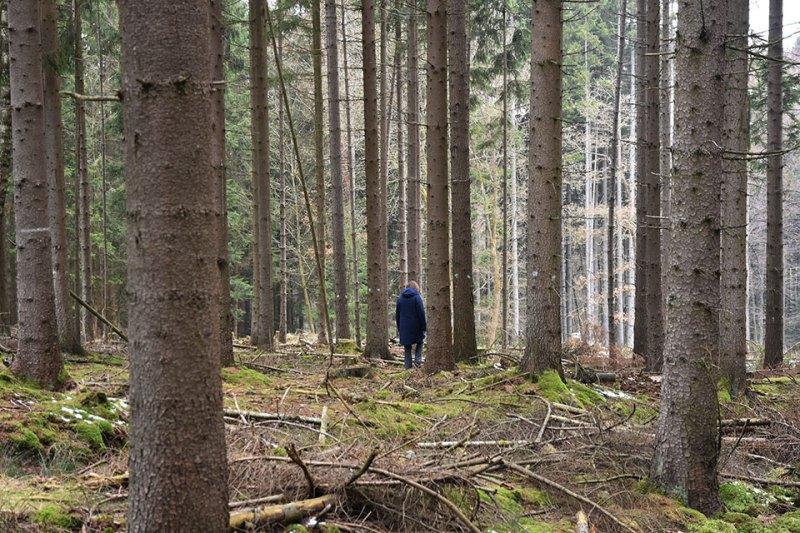 Walderinnerung