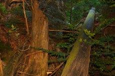 Nationalpark Bayerischer Wald - Felswandergebiet#7