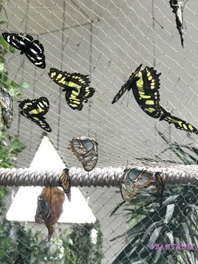 butterfly garden, dubai blogger,