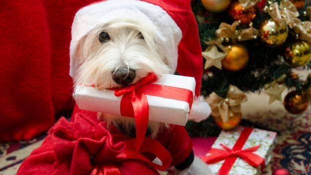 dog holding Christmas present in his mouth