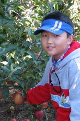 boy-apple-upick-400x600