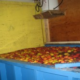cidermill-apples-600x400