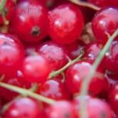 gooseberries-600x400