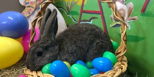 Easter Event at the Taves Family Farms