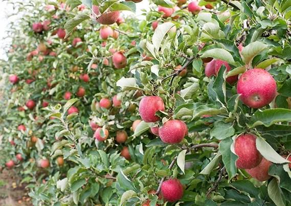 apple-home-01class=