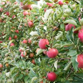 apple-home-01
