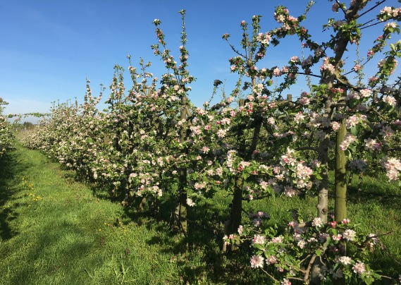 Blossomfest at the Taves Family Farms