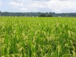 農家は農地を持ったほうが得?借りたほうが得?