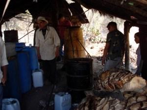 Destilación en arbol de zomplantle, Zumpahuacan, Estado de México