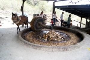 Molienda, San Baltazar Chichicapam, Oaxaca