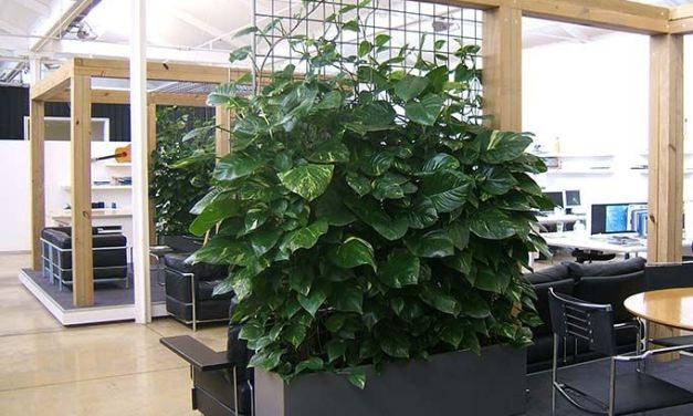 Improving performance with office greenery.