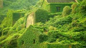 Office greenery
