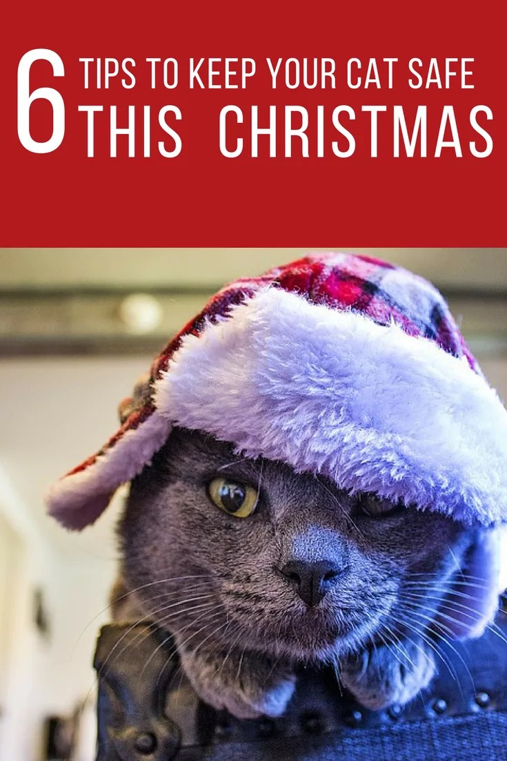 Follow these tips to help keep your cat safe from accidental injury or illness this Christmas.