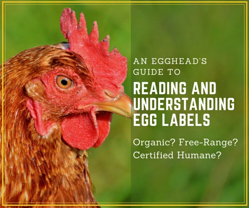 An Egghead's Guide to Reading Egg Labels Egg Label