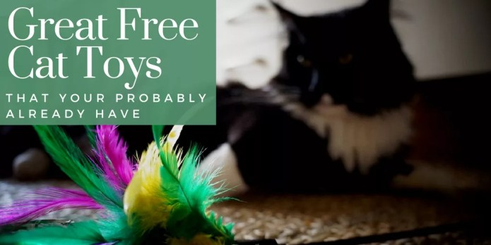 Great free cat toys that you probably already have