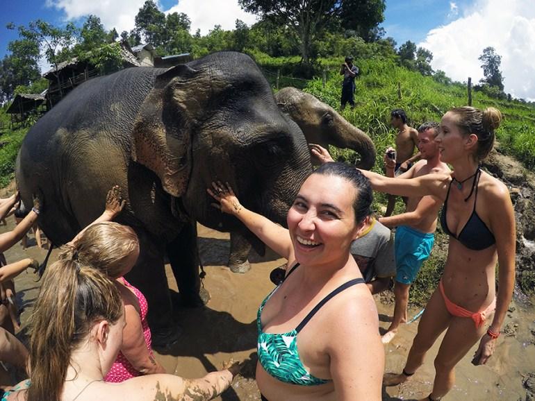 Elephant Thailand www.taylorstracks.com