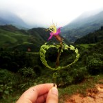 Gift in Sapa Vietnam www.taylorstracks.com
