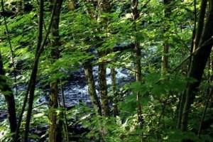 Dorans Rapids
