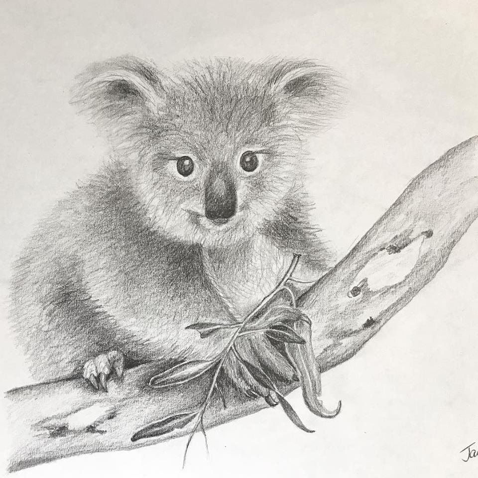 Tazi koala pencil