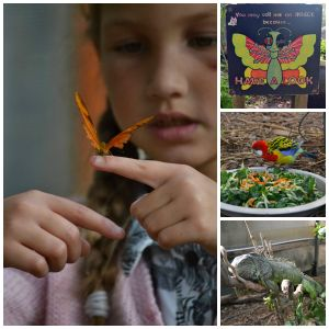 things to do, kids, family, kid friendly, Butterfly World, Stellenbosch, Klapmuts, travel