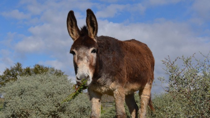 Discover McGregor, travel, small towns, south africa, donkey sanctuary, family