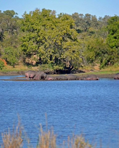kruger national park, pictures, wildlife, animals, big 5, national parks, south africa, road trip, mpumalanga, hazyview, family, travel