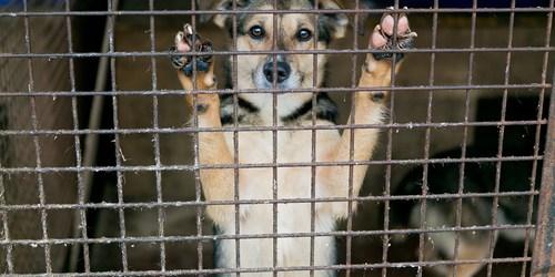 Lost Pets   Pet Adoption   Homeless Pets