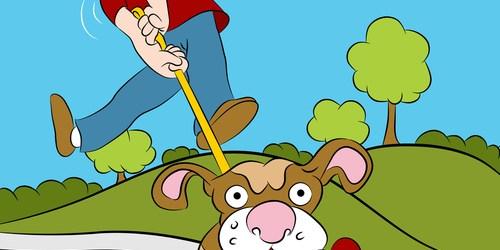 Dog Walking   Pet Care   Pet Welfare
