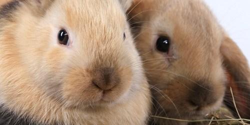 Easter Egg Hunt | Easter | Easter Bunny