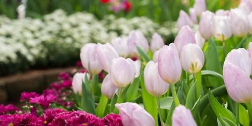 Garden Stroll   Flowers   Gardening