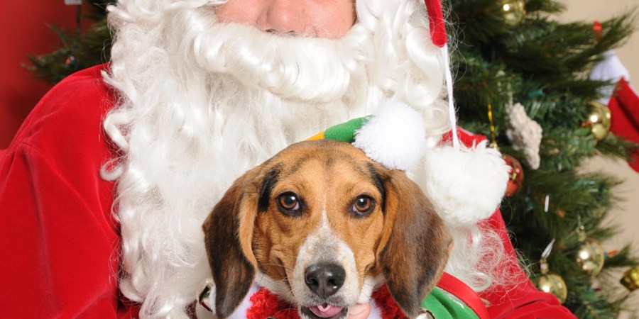 Pets | Dogs and Cats | Pinellas Animal Services