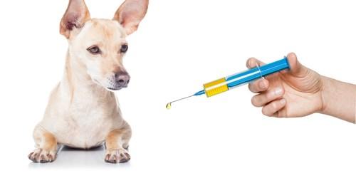 Rabies   Rabies Vaccine   Vet