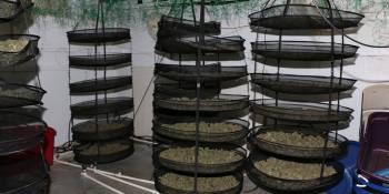 Hernando Sheriff | Drug Bust | Grow Houses